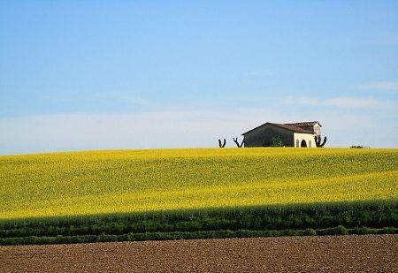 Immagine per la categoria AGRARIA